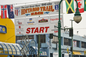A Thousand Barking Dogs in Anchorage – Iditarod Start 2013