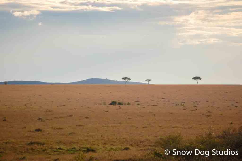 Afternoon, Masai Mara National Reserve, Kenya