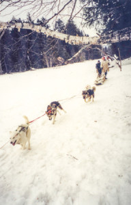 dogsledding-5